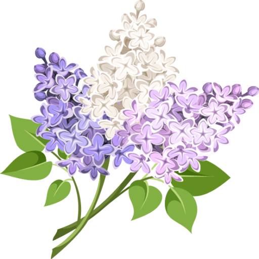 פרחי לילך קרית מוצקין